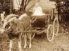 Cecilia Munro - In Goat Cart